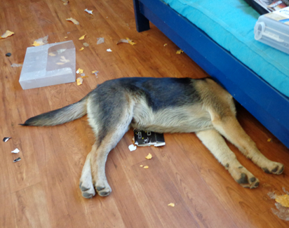 Puppy sleeps in the mess